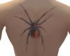Back Red Back Spider