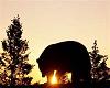 Black Bear Swing
