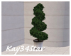Spiral Topiary Plant