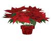 Christmas Plant  (LFH)