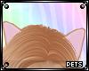 P |Chichi | ears v2