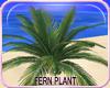 MLM Paradise Beach Fern
