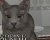 Grey Cat  Vacuum / Giz