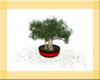 OSP Animated Bonsai Tree