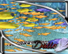 Swimming flat fish