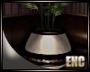 ENC. CAMI PLANT