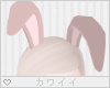 [Q] Choco Bunny