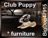 [BD] Club Puppy