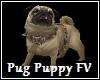 Pug Puppy FV