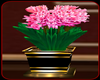 !     PINK  LILIES