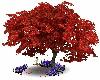 Skys Maple Love Tree