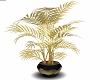 Black N Gold Plant