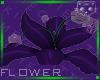 Flower Purple 2a Ⓚ