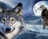 wolfs Pic's w/Frames
