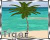 *TR*Animated Palm