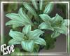 c Floral Vines