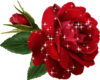 Animated Rose Sticker