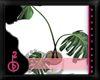 |OBB|LYRIC'S PLANT