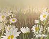 Spring Photo Flowers Ani