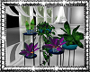Decor Plants