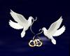 Ring Dove weeding