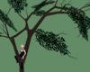 Pandorean Climbing tree