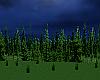 Evening Woods Enhancer