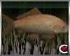 Lake Fish Ani