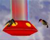 N} Hummingbird Feeder-C1