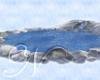 ~N~ Winter Pond