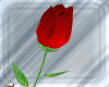 RED CUTE ROSE