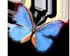 *MSD* Butterfly