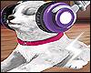B| Puppy & Headphones