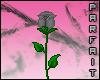 (*Par*) Grey Rose