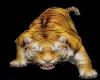 Tiger pet animated