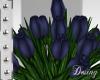 D: Tulip Navi Blue Plant