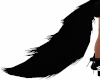 Black Wolf Tail