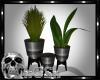 CS Black & Silver Plants