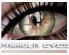 [V4NY] Primula Eyes 04