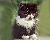 Cutie Kittie