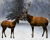 REINDEER GREETING