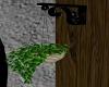 planta danuvio