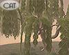 Riverside Willow Tree
