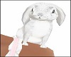 White Shoulder Bunny