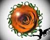 Orange Rose (f)