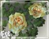 c Rose Vines
