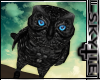 Black Shoulder Owl [M/F