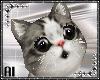 Head Kitten V2