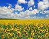 my Ukraine