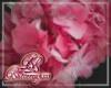 Pink Hydrangea Flower L